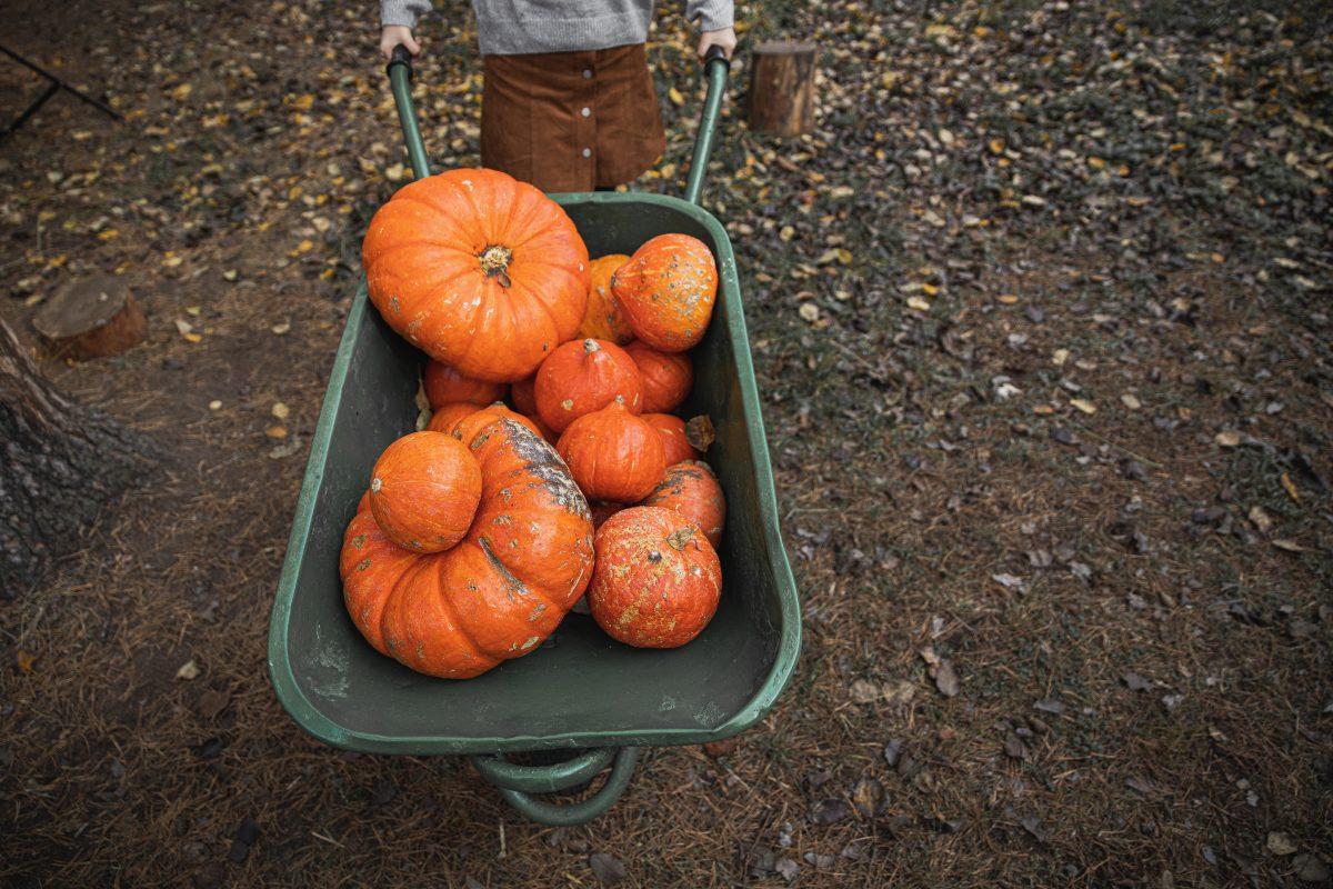 Nejvíc živin je v ovoci a zelenině, když se sklidí. Takže je nejlepší kupovat ty lokální a zdlábnout je co nejdřív.