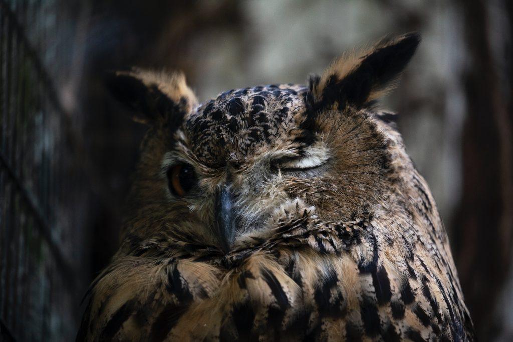 ranní ptáče, vstávání, spánek, sova